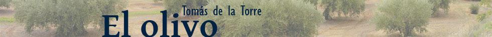 Tomás de la Torre