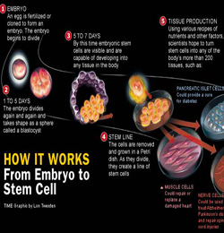 Investigadores piden que Tribunal Europeo no prohiba patentar derivados de células madre embrionarias