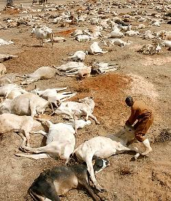 Monjes benedictinos consiguen salvar de la sequía a la ganadería de una región de Kenia