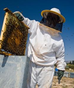 Regalan al Papa medio millón de abejas para la granja del Vaticano